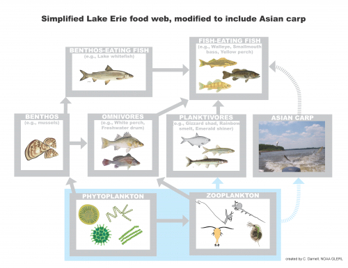 Assessing Risk of Asian Carp Invasion