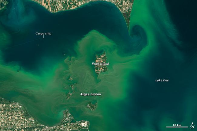 Press Release: Multiple factors, including nitrogen, may shape toxicity of Lake Erie cyanobacterial blooms