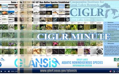 CIGLR Spotlight: GLANSIS